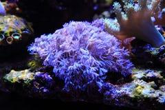 fundo do aquário do mar Fotografia de Stock