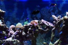 fundo do aquário do mar Fotos de Stock