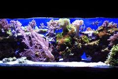fundo do aquário do mar Foto de Stock