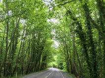 Fundo do asfalto com árvore Imagens de Stock