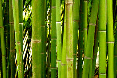 Fundo do bambu verde Fotografia de Stock Royalty Free