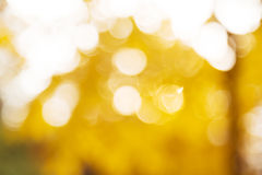 Fundo do bokeh do outono Fotografia de Stock Royalty Free