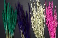 Fundo do branco da planta de arroz da grama de Rye Fotos de Stock