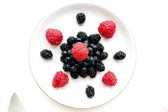 Fundo do branco de Forest Berries Composition Isolated On Fotos de Stock Royalty Free