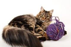 Fundo do branco do gato Imagem de Stock Royalty Free