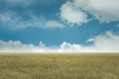 Fundo do céu e da grama, campos verdes frescos sob o céu azul no outono Imagem de Stock