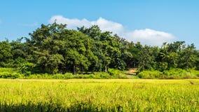 Fundo do campo de almofada da floresta e do céu Imagens de Stock