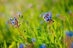 Fundo do campo de flores da natureza Foto de Stock