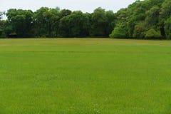Fundo do campo de grama Imagens de Stock