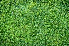 Fundo do campo de grama verde, textura, teste padrão Fotografia de Stock