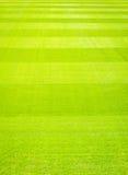 Fundo do campo de grama verde, textura, teste padrão Fotos de Stock Royalty Free