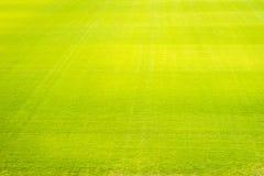 Fundo do campo de grama verde, textura, teste padrão Foto de Stock Royalty Free