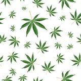 Fundo do cannabis O cânhamo da erva daninha de Ganja da marijuana folheia teste padrão sem emenda do vetor ilustração do vetor
