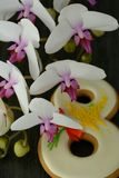 Fundo do cinza 8 de março do pão-de-espécie e da orquídea Fotografia de Stock Royalty Free