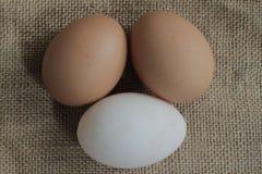 Fundo do clássico de três ovos Imagem de Stock