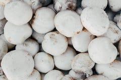 Fundo do cogumelo muitos cogumelos do branco Cogumelo do cogumelo Fotografia de Stock