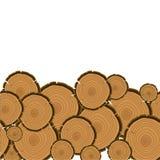 Fundo do corte dos anéis de árvore Seção de madeira do tronco Fotos de Stock