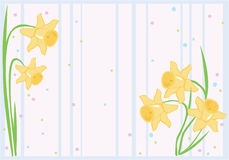 Fundo do Daffodil Foto de Stock Royalty Free