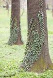Fundo do detalhe da árvore Foto de Stock Royalty Free