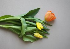 Fundo do dia das mulheres com as flores bonitas da tulipa Fotografia de Stock