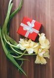 Fundo do dia das mulheres com as flores bonitas da tulipa Fotos de Stock Royalty Free