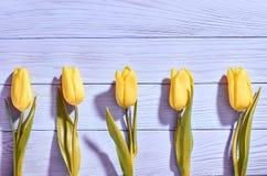 Fundo do dia de mães Amarelo das tulipas na madeira azul Fotografia de Stock