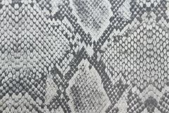 Fundo do Dray feito da pele de uma serpente ou da pele de um réptil, Cr imagem de stock royalty free