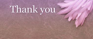 Fundo do encabeçamento de Angelic Thank You Pink Feather imagem de stock
