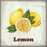 Fundo do esboço do fruto fresco Ilustração do desenho da mão do vintage de um limão ilustração royalty free