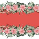 Fundo do espelho da beira das folhas de palmeira do monstera do plumeria do hibiscus ilustração stock