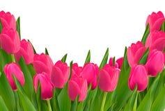 Fundo do feriado com o ramalhete de flores vermelhas Fotografia de Stock