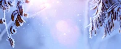 Fundo do feriado de Art Blue Christmas com as árvores nevado congeladas imagem de stock royalty free