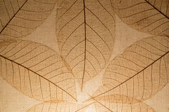 fundo do fim da folha da árvore acima Fotografia de Stock