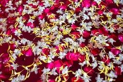 Fundo do flutuador da flor da pétala na água fotografia de stock royalty free