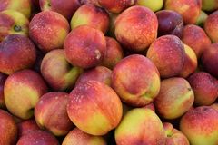 Fundo do fruto da nectarina Imagem de Stock