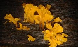 Fundo do fungo Foto de Stock