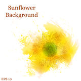 Fundo do girassol Flor amarela da aquarela Fotos de Stock