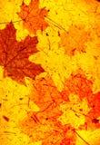 Fundo do Grunge com folhas de outono Foto de Stock Royalty Free