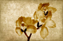 Fundo do grunge das orquídeas Imagens de Stock