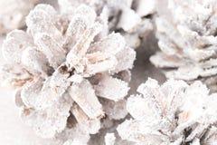 Fundo do Grunge de cones do pinho Objeto do pinho Cones Imagens de Stock