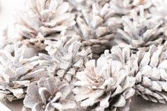 Fundo do Grunge de cones do pinho Objeto do pinho Cones Fotos de Stock
