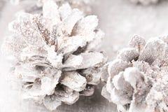 Fundo do Grunge de cones do pinho Objeto do pinho Cones Fotografia de Stock