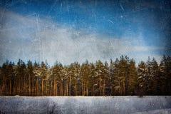 Fundo do grunge do inverno (pinhos) fotografia de stock