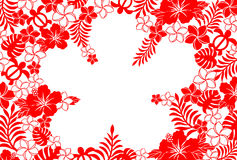 Fundo do hibiscus Fotos de Stock
