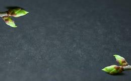 Fundo do inchamento dos botões no cinza Brota diagonalmente Fotos de Stock