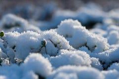 Fundo do inverno Fotos de Stock
