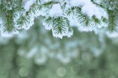 Fundo do inverno Imagem de Stock Royalty Free