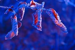 Fundo do inverno com folhas congeladas Imagem de Stock Royalty Free