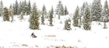 Fundo do inverno da raça de cão de trenó da fuga de Iditarod Fotografia de Stock