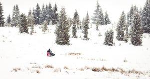 Fundo do inverno da raça de cão de trenó da fuga de Iditarod Fotografia de Stock Royalty Free